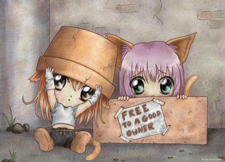 Днем рождения, аниме с котами картинки с надписями