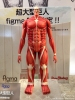 photo of figma Colossal Titan
