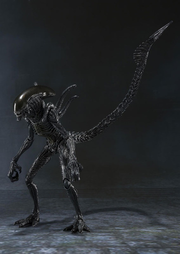 main photo of S.H.MonsterArts Warrior Alien