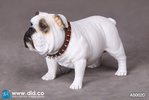 photo of British Bulldog AS002D
