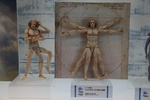 photo of figma Vitruvian Man